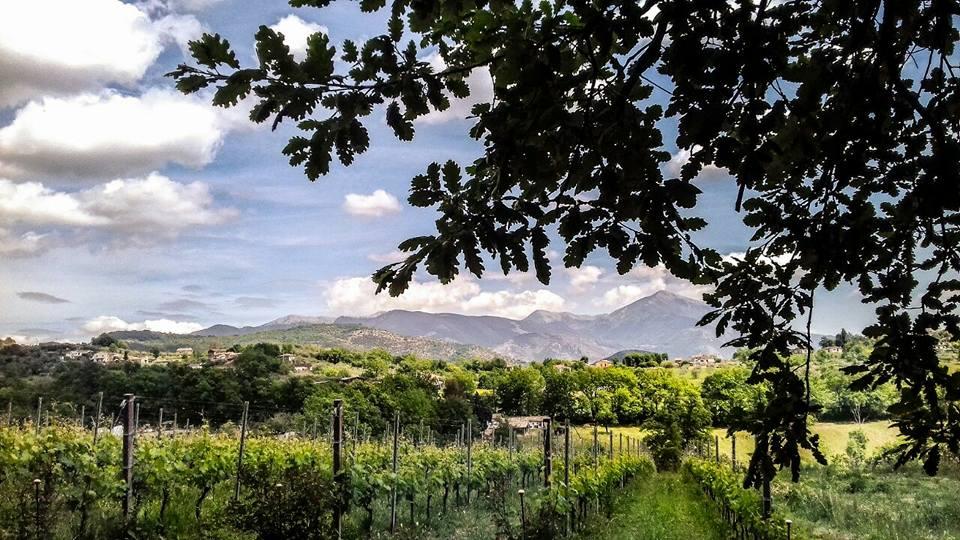 palazzo tronconi wine farm