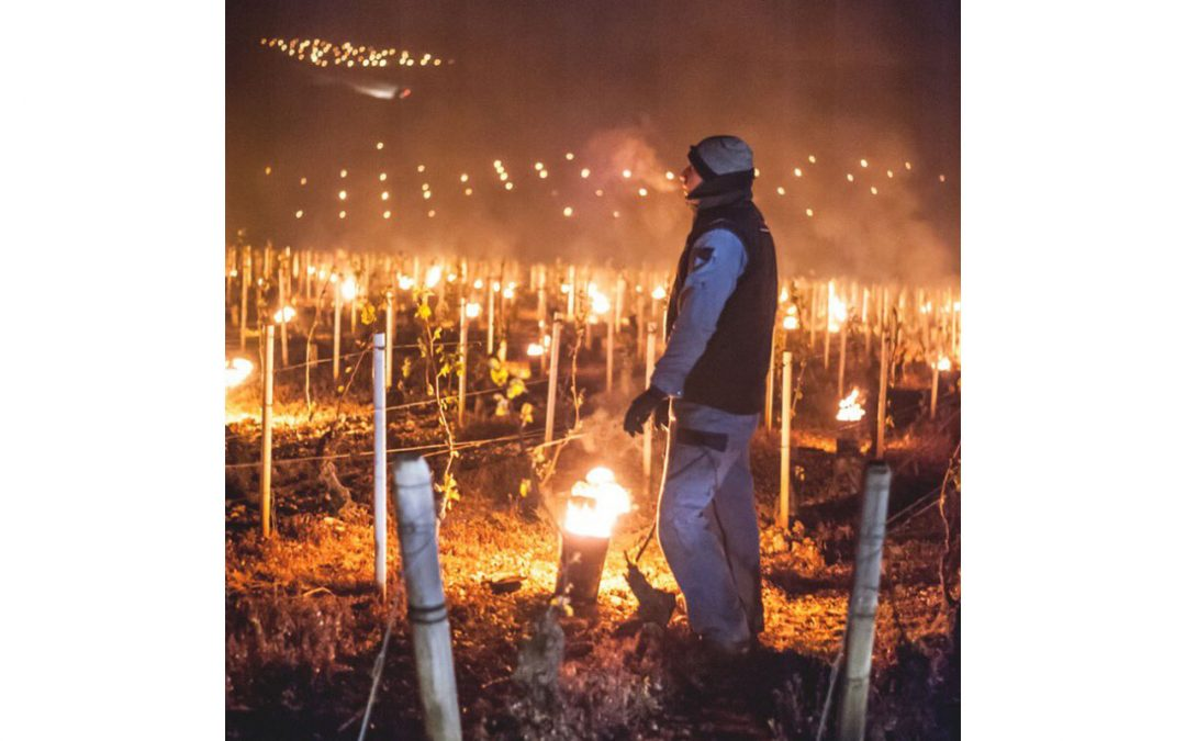 Natural Wine news – Drought and night frosts: what's happening in Italy