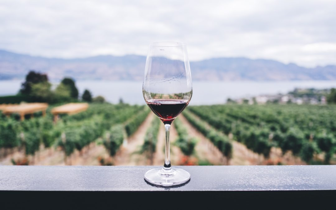 The new trend of vineyard wine tasting in the UK