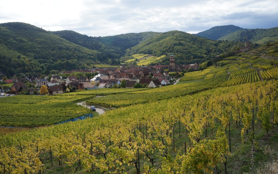 On the Alsace Wine Route