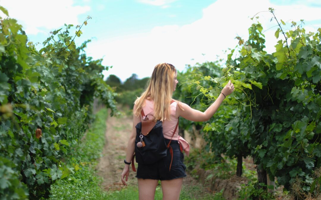 Weekend wine tours in the UK: three ideas
